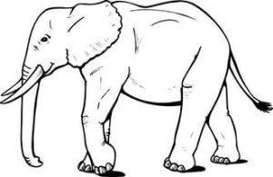 free-animals- Elephant-printable-coloring-pages-for-preschool