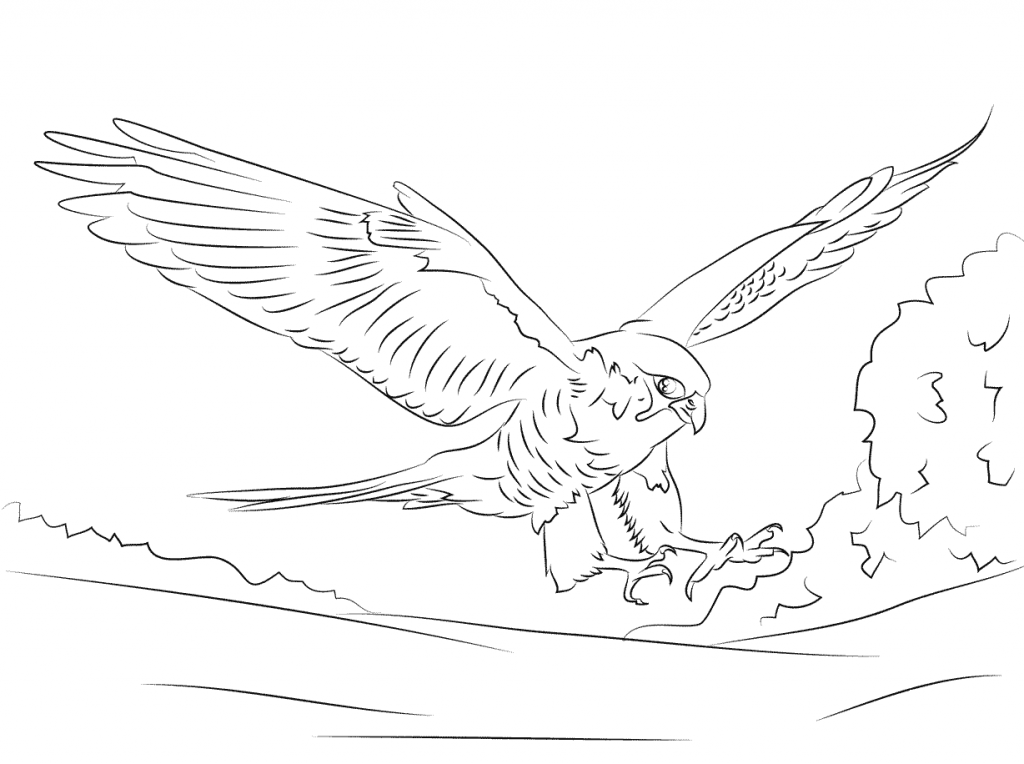 free-animals- Falcon -printable-coloring-pages-for-adults