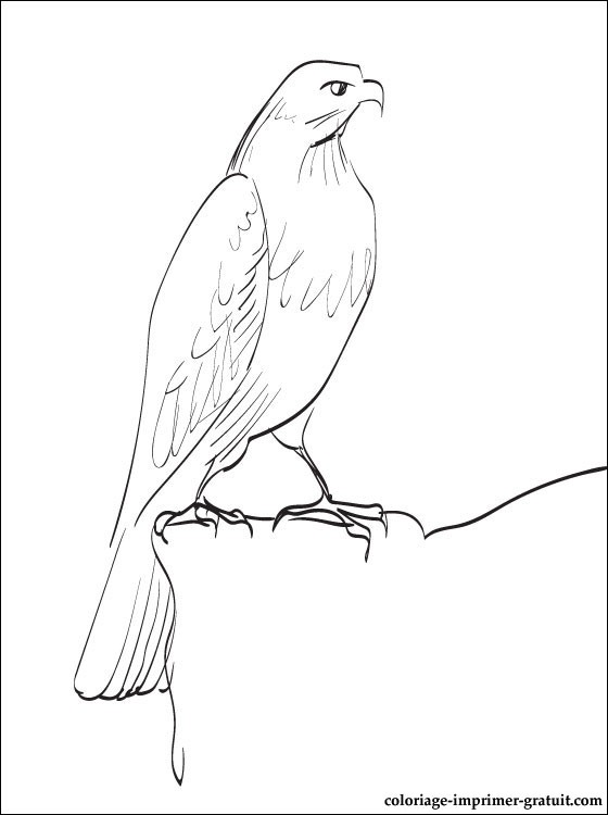 free-animals- Falcon-printable-coloring-pages-for-preschool