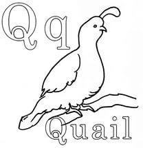 free-animals-Quail-printable-coloring-for-preschool