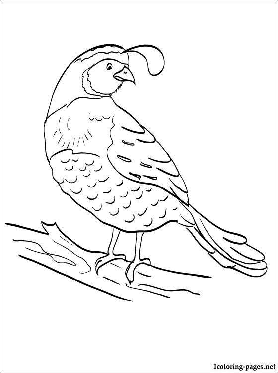 free-animals-Quail -printable-coloring-pages-for-preschool