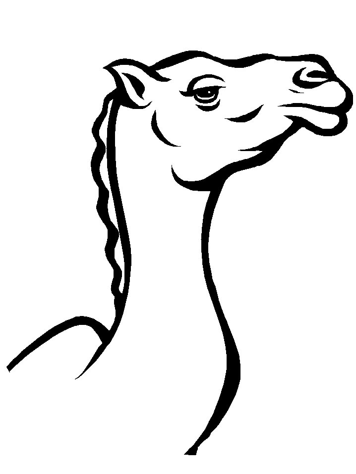 free-animals-camel-printable-coloring-pages-for