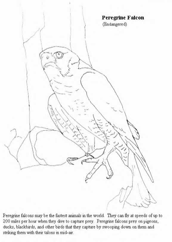 free-animals doğan-printable-coloring-pages-for-preschool