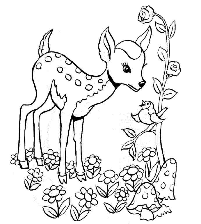 free-animals- gazelle printable-coloring-pages-for-preschool