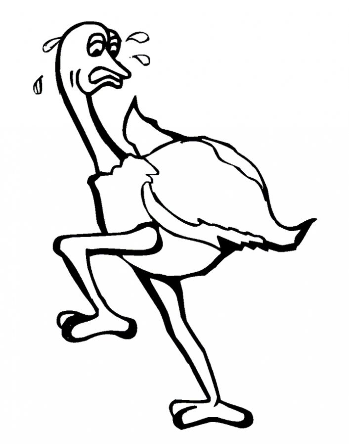 Ostrich Coloring Pages for Kids - Preschool and Kindergarten