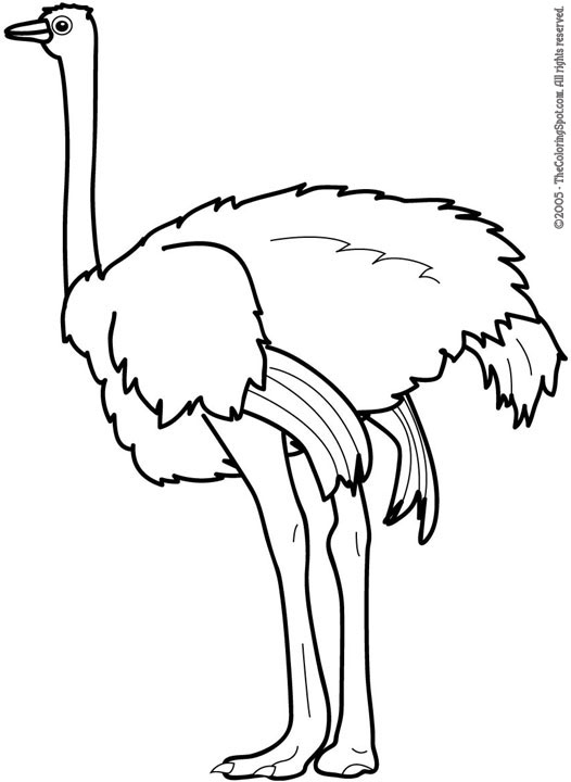 free animals-ostrich-printable-coloring-pages-for-preschool