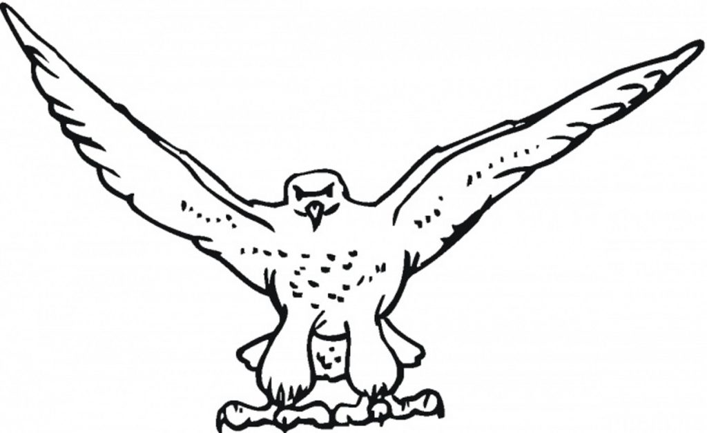 free-falcon-bird-coloring-pages