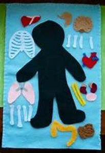 human body craft activity for kids