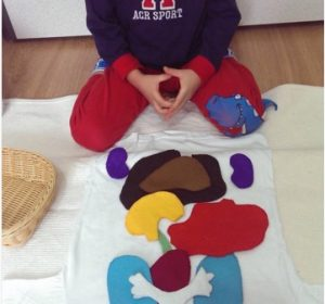 human body crafts for montessori education for kids