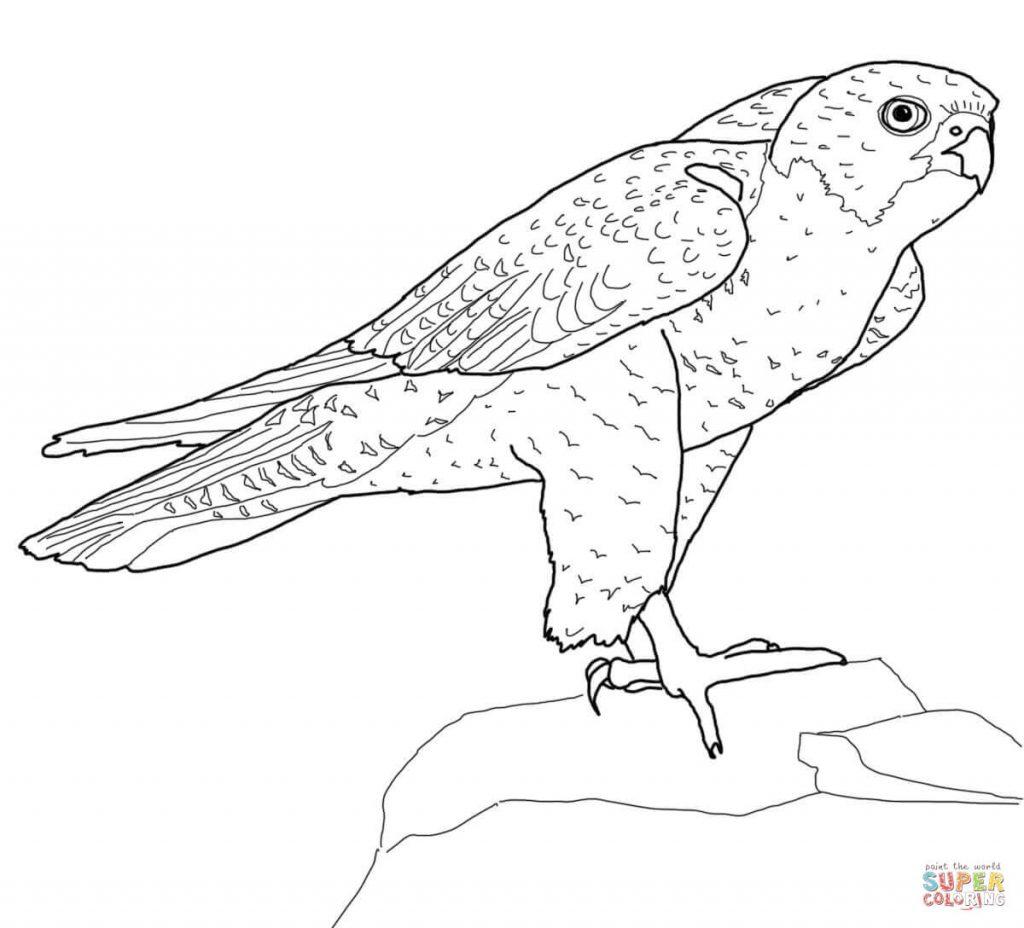perched-peregrine-falcon-coloring-page