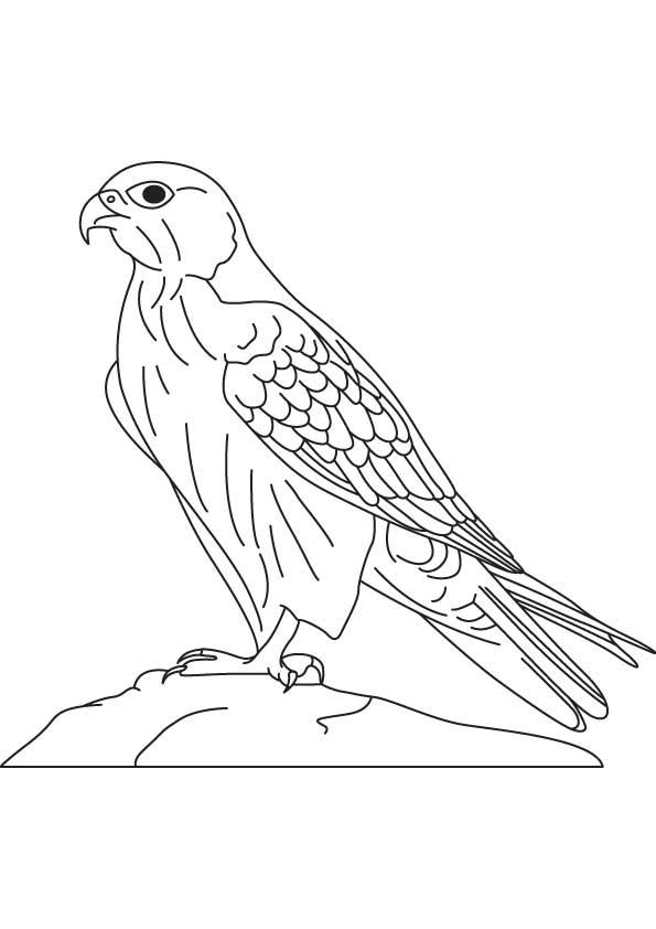 peregrine-falcon-colouring