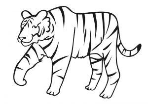 zoo-coloring-pages-tiger