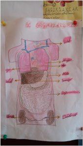human bodies activities