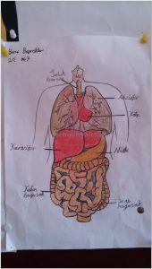 human bodies activity