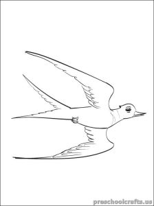 swallow coloring pages