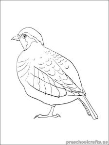 swallow free printable coloring pages for children
