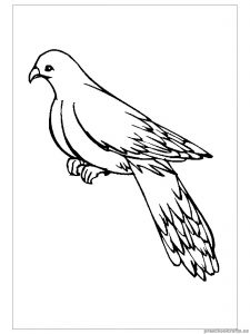 swallow printable coloring pages for preschool