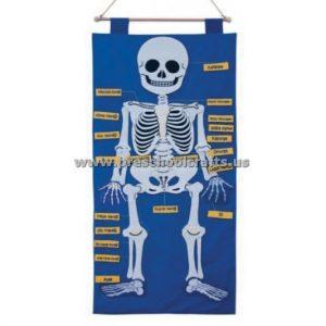 Skeleton Crafts ideas - bulletin-board-human-body