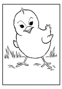 chick coloring pages - chicken colouring page